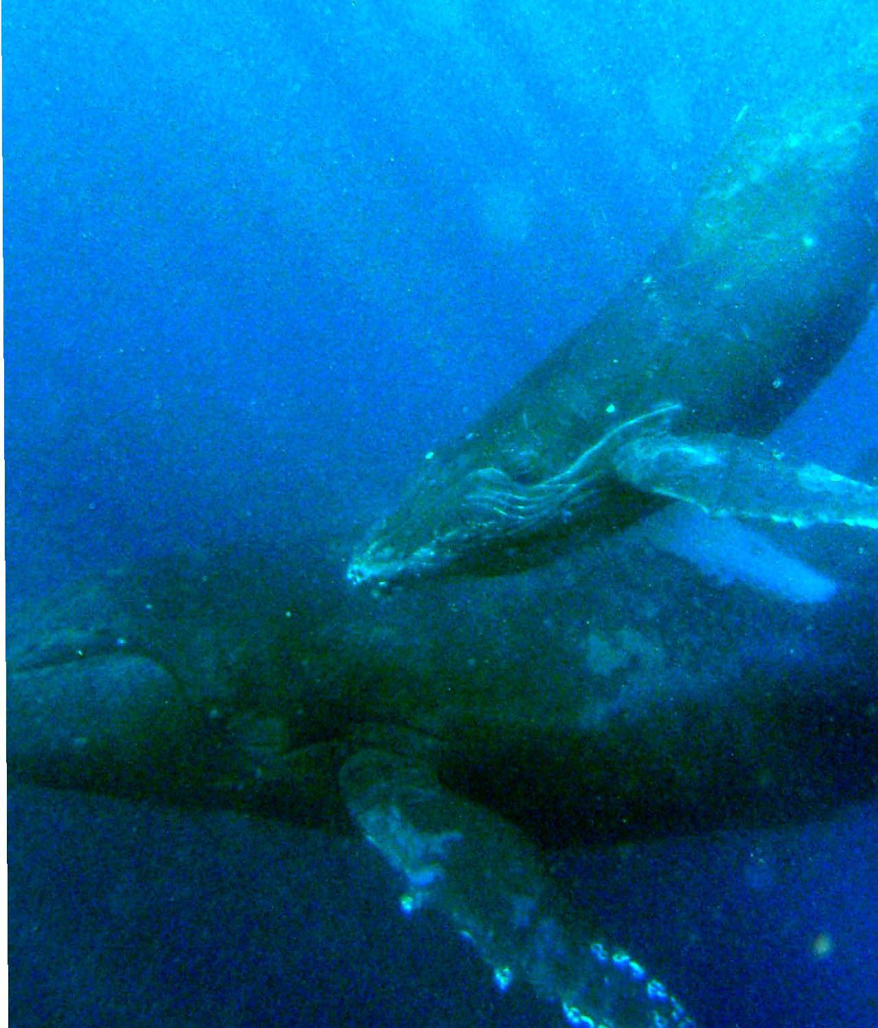 クジラの画像 p1_37