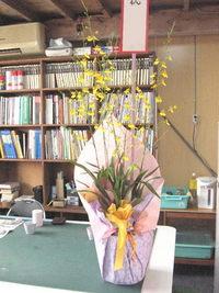 お祝いにお届けした花鉢オンシジューム