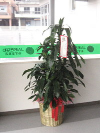 開店祝いの観葉植物