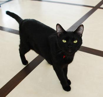 黒猫の画像 p1_23