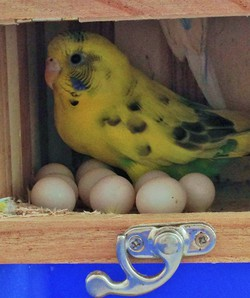 卵が10コも!