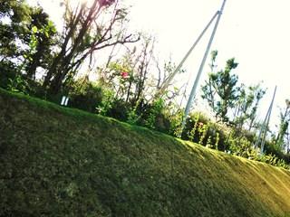 下から眺めた芝生