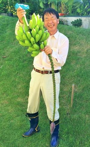 バナナの収穫