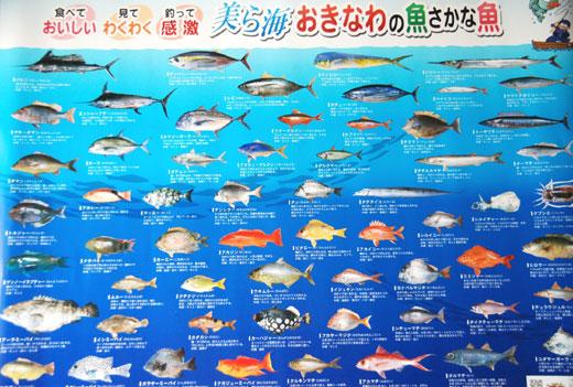 カレンダー カレンダー こども : 県魚ポスター「美ら海 おきな ...