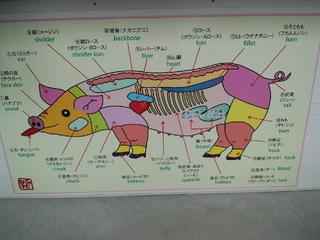 豚の画像 p1_35