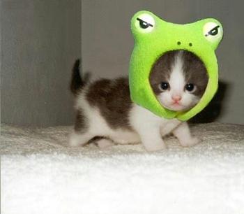 かわいいネコちゃん☆